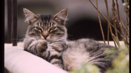 Furry Cats Picture Download
