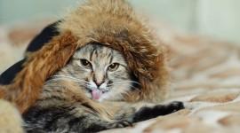 Furry Cats Wallpaper