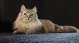 Furry Cats Wallpaper For Desktop