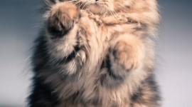 Furry Cats Wallpaper For IPhone