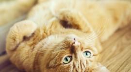 Furry Cats Wallpaper Free