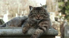 Furry Cats Wallpaper Gallery