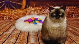 Furry Cats Wallpaper HQ