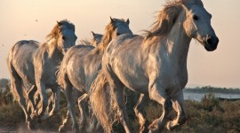 Galloping High Quality Wallpaper