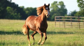 Galloping Wallpaper Background