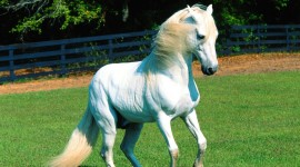 Galloping Wallpaper For PC