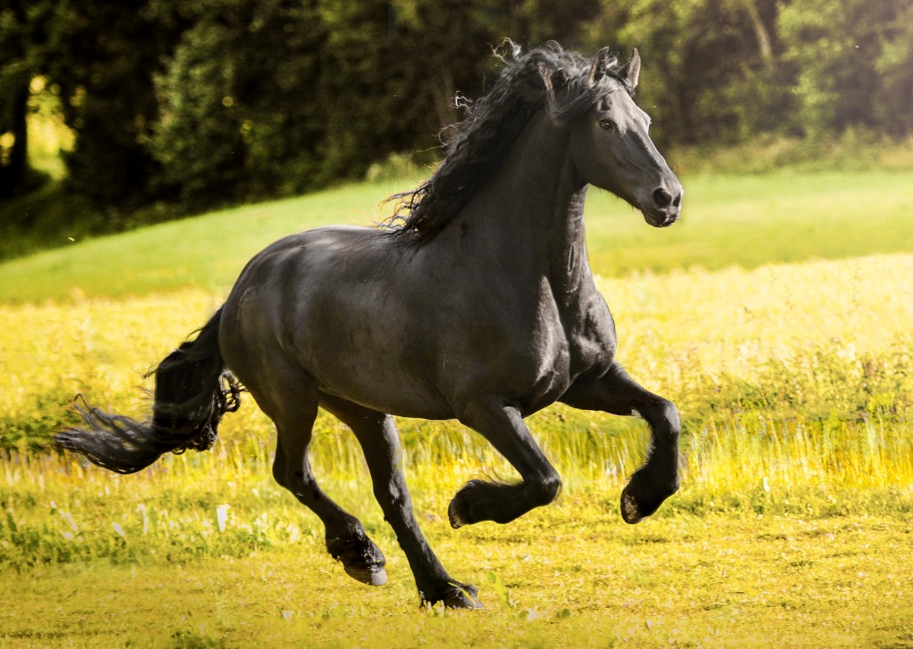 Galloping wallpapers HD