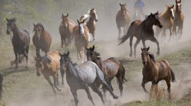 Galloping Wallpaper Gallery