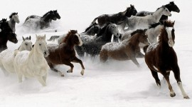 Galloping Wallpaper High Definition