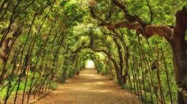 Giardino Di Boboli Photo Free#2