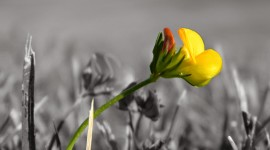 Lonely Flower Photo Download