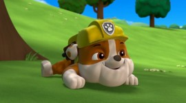 Paw Patrol Aircraft Picture