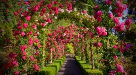 Butchart Gardens Wallpaper Download