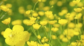 Buttercup Wallpaper Background