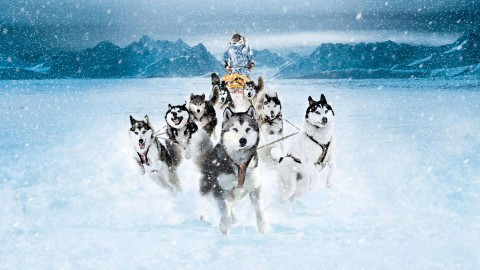 Eight Below wallpapers high quality