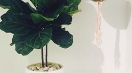 Indoor Flowers Wallpaper Background