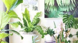 Indoor Flowers Wallpaper For IPhone Free