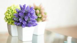 Indoor Flowers Wallpaper Gallery