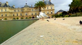 Jardin Du Luxembourg Photo Download