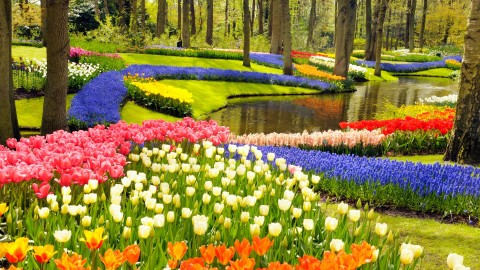 Keukenhof wallpapers high quality