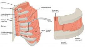 Muscles Best Wallpaper