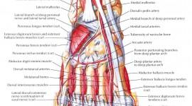 Muscles Wallpaper Download