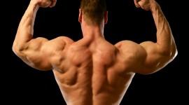 Muscles Wallpaper For Desktop
