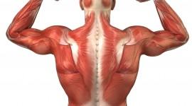Muscles Wallpaper Full HD