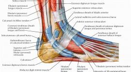 Muscles Wallpaper HD