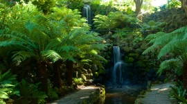 Royal Botanic Gardens Melbourne Photo#3