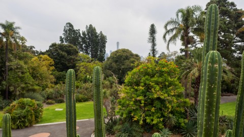 Royal Botanic Gardens Melbourne wallpapers high quality