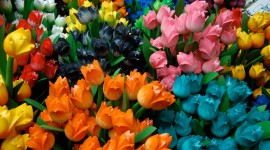 Sale Of Tulips Wallpaper Download Free