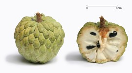 Sugar Apple Wallpaper Background