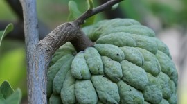 Sugar Apple Wallpaper For IPhone 6