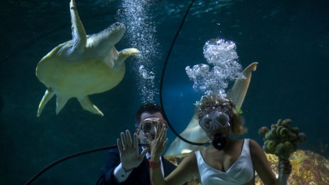 Wedding Underwater wallpapers high quality