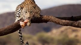 4K Africa Animal Best Wallpaper