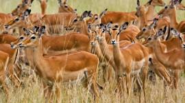 4K Africa Animal Desktop Wallpaper