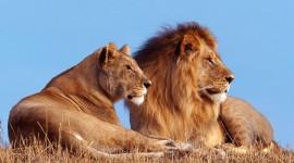 4K Africa Animal Desktop Wallpaper For PC