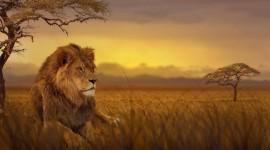 4K Africa Animal Image
