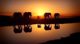 4K Africa Animal Image Download