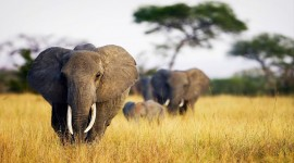 4K Africa Animal Photo Download