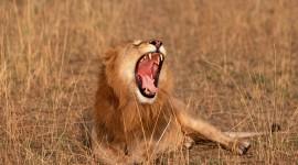 4K Africa Animal Photo Free