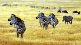 4K Africa Animal Picture Download