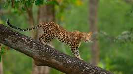 4K Africa Animal Wallpaper