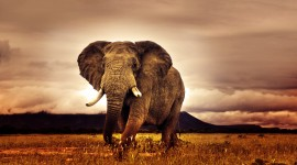 4K Africa Animal Wallpaper Download