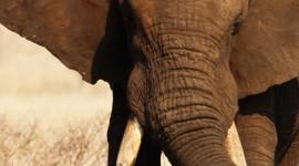 4K Africa Animal Wallpaper For IPhone