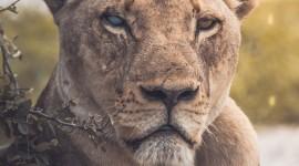 4K Africa Animal Wallpaper For Mobile
