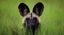 4K Africa Animal Wallpaper For PC