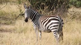 4K Africa Animal Wallpaper Free