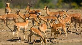 4K Africa Animal Wallpaper Gallery
